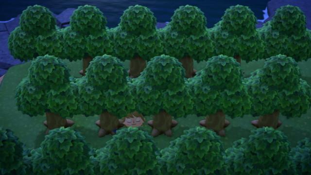 育た フルーツ ない 森 あつ
